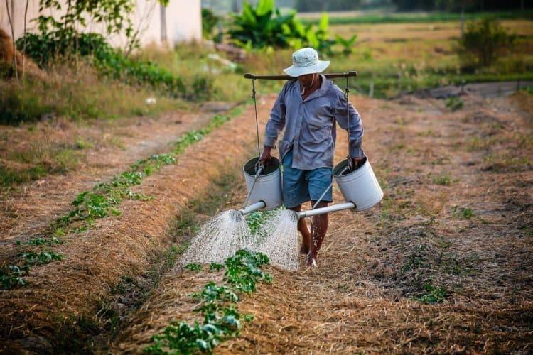 segurado especial agricultor
